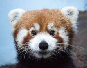 Animal List | Birmingham Zoo