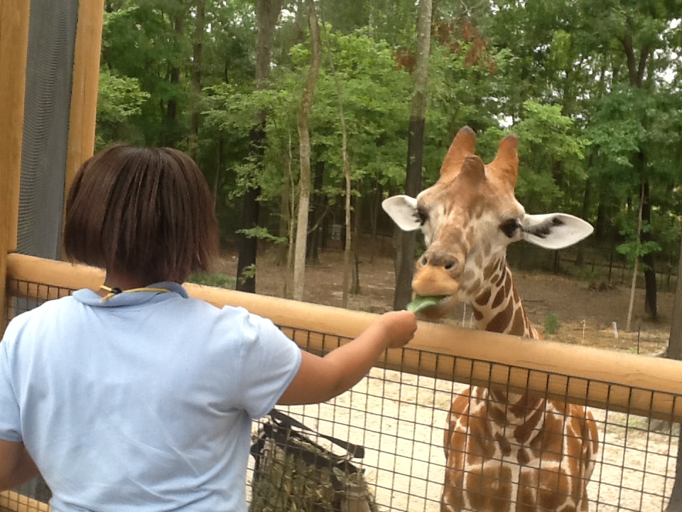 ZooSchool