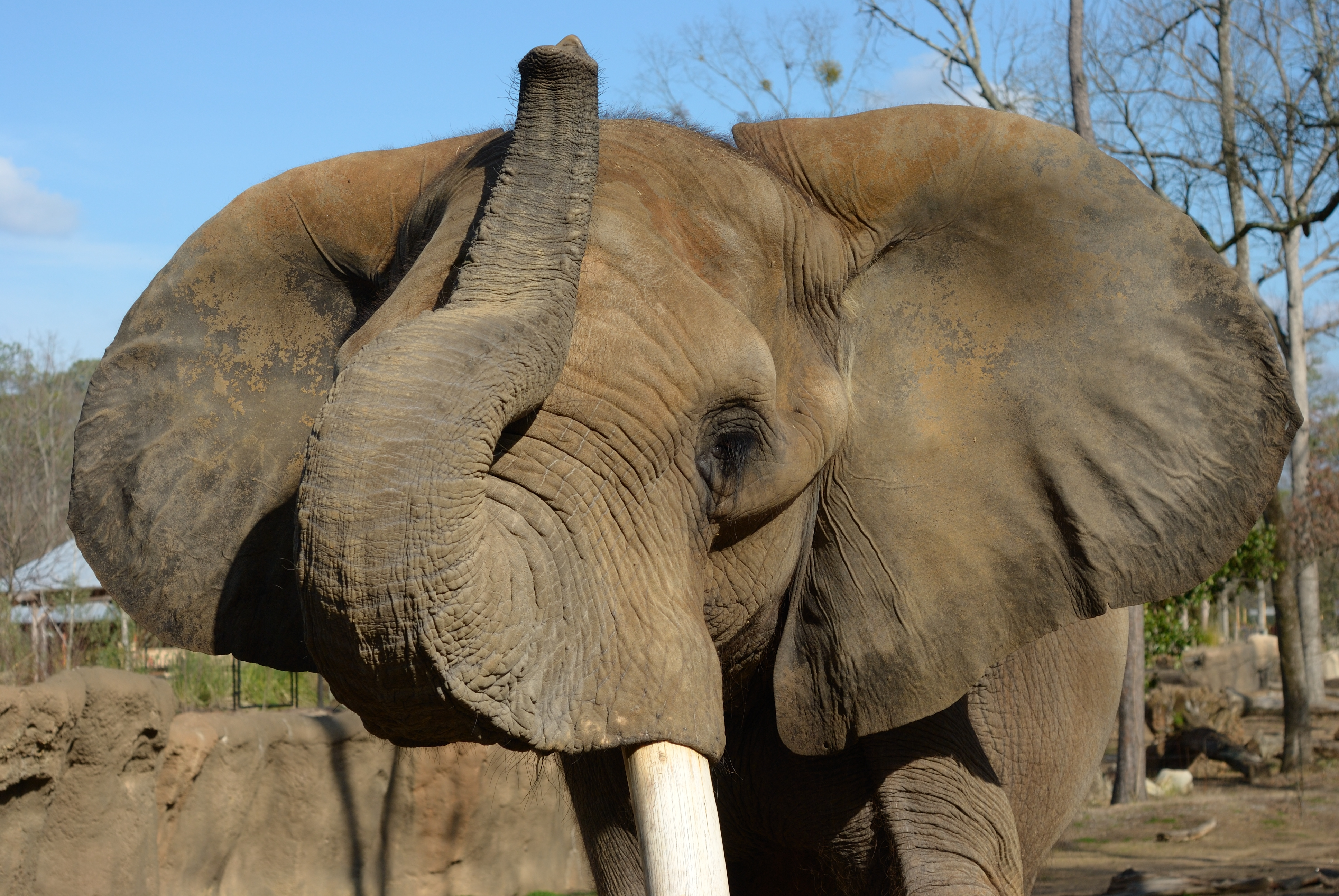 an analysis of the animal collection and the zoos major attraction And for its diverse collection of animals from the major continents saint louis zoo named top free attraction and the saint louis zoo the animals.