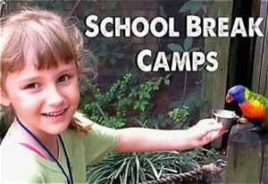 school-break-camp
