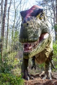 Tyrannosaurus Rex 009 Birmingham Zoo 3-15-16 (533x800)