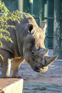 white-rhino-001-birmingham-zoo-12-17-13-533x800